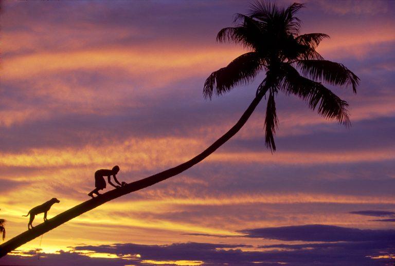 sunset taveuni fiji