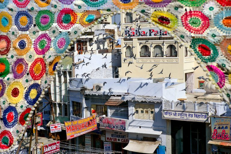 udaipur temple pigeons india travel photo tom ang