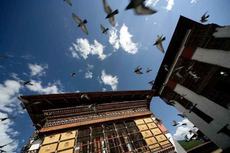 thiumpu monastery pigeons travel photo tom ang