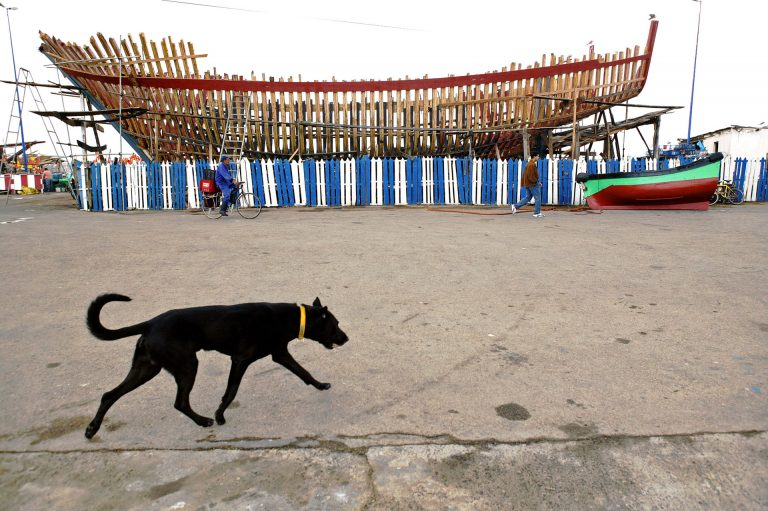 morocco dog ship building